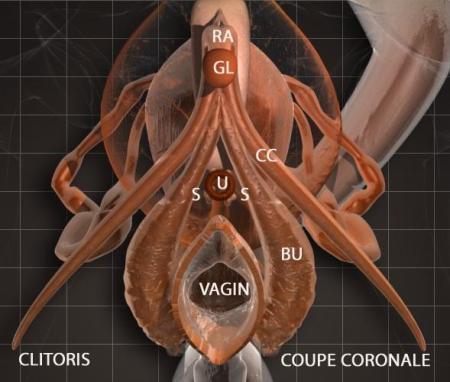 clitoris image