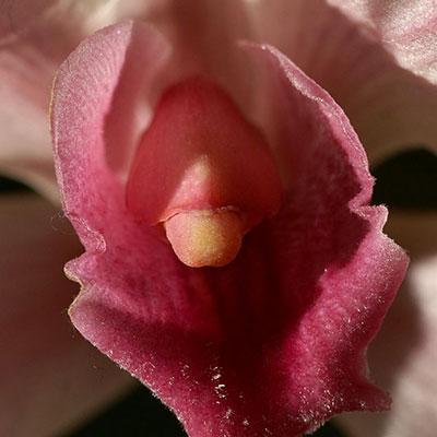 erotic-flower-400