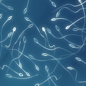 concentration-spermatozoides