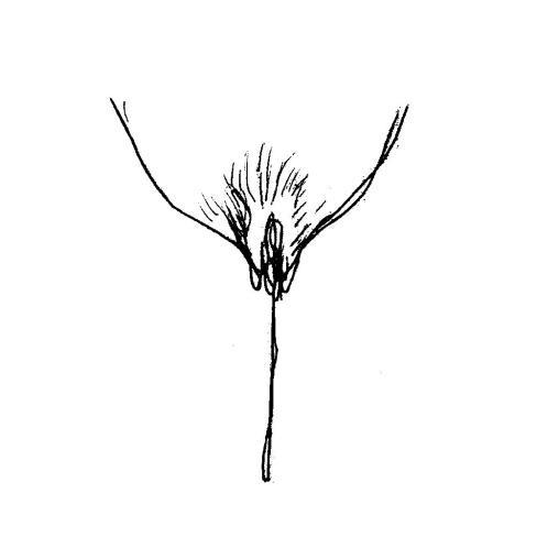les-collabos-dessinent-leurs-vulves-pour-illustrer-la-belle-diversite-corporelle-381296