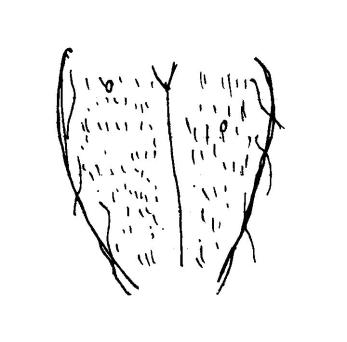 les-collabos-dessinent-leurs-vulves-pour-illustrer-la-belle-diversite-corporelle-381298