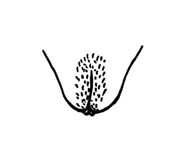 les-collabos-dessinent-leurs-vulves-pour-illustrer-la-belle-diversite-corporelle-381301