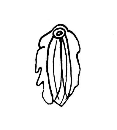 les-collabos-dessinent-leurs-vulves-pour-illustrer-la-belle-diversite-corporelle-381305