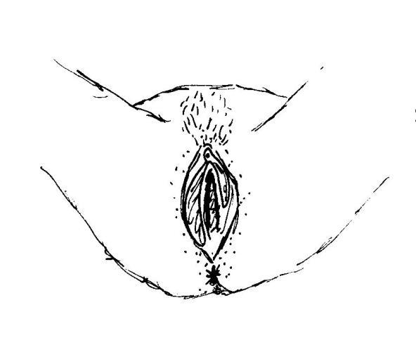 les-collabos-dessinent-leurs-vulves-pour-illustrer-la-belle-diversite-corporelle-381314