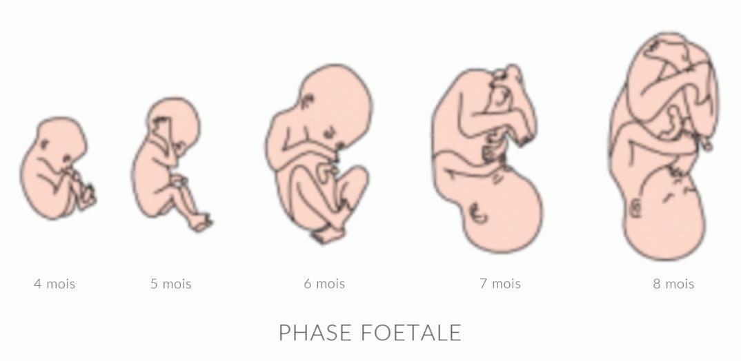 bébés 2